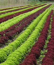 Umění v zemědělství